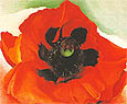 Georgia OKeeffe : Poppy 1927 : $355